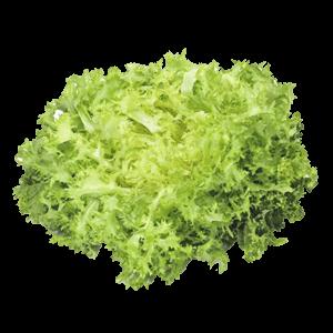 Endivie Salat
